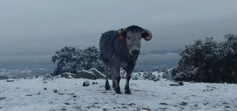 El campo bravo de Jaén, nevado