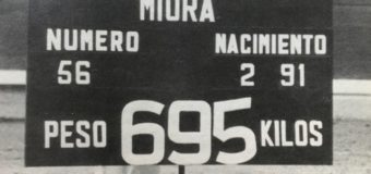 El Miura que pesó casi 700 kilos